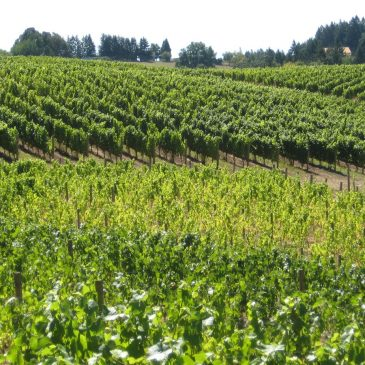 Pinot Noir: Not my favorite