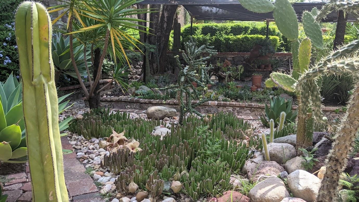 Mexican cactus garden